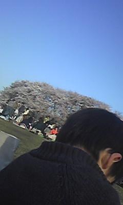 砧公園花見